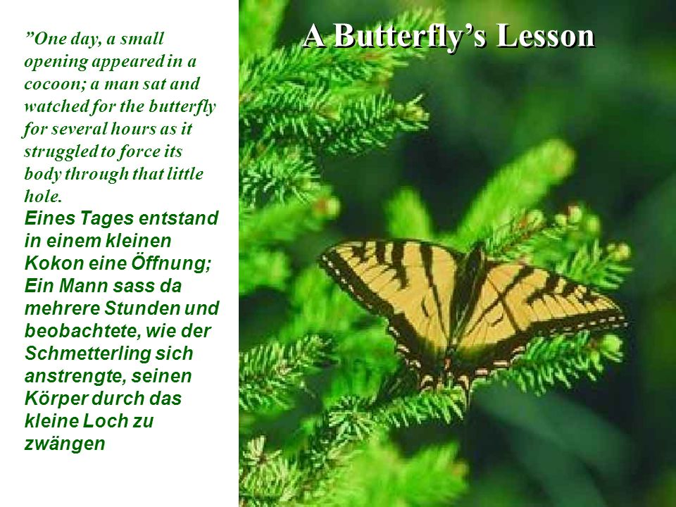 A Butterfly's Lesson One day, a small opening appeared in a cocoon; a man sat and watched for the butterfly for several hours as it struggled to force its body through that little hole.