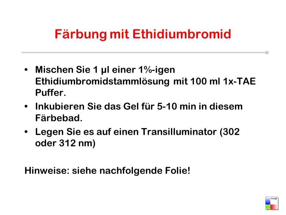 Färbung mit Ethidiumbromid Mischen Sie 1 µl einer 1%-igen Ethidiumbromidstammlösung mit 100 ml 1x-TAE Puffer. Inkubieren Sie das Gel für 5-10 min in d