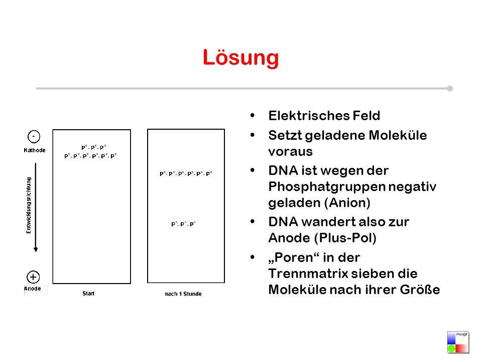 Lösung Elektrisches Feld Setzt geladene Moleküle voraus DNA ist wegen der Phosphatgruppen negativ geladen (Anion) DNA wandert also zur Anode (Plus-Pol