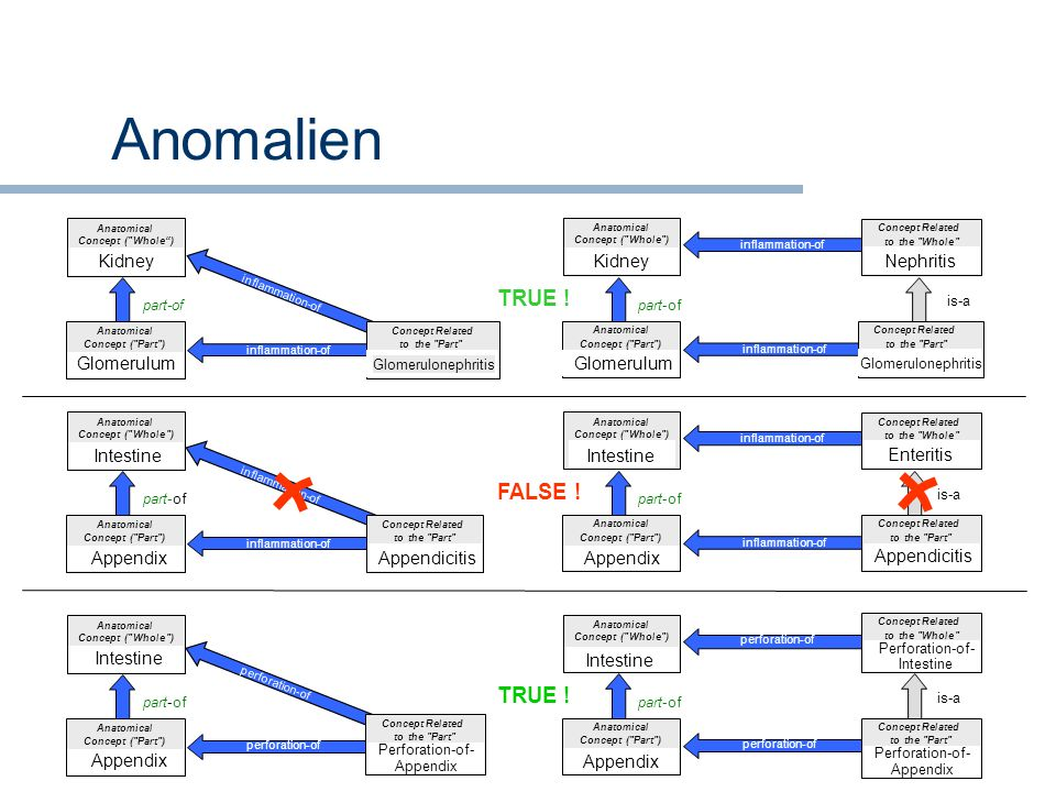 Anomalien perforation-of inflammation-of Anatomical Concept (