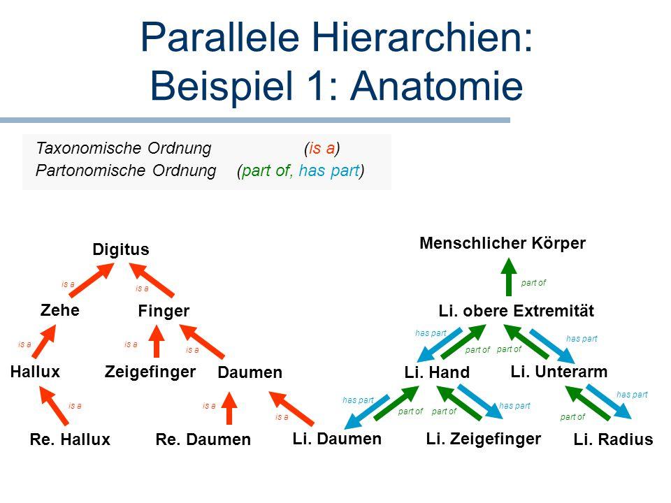 Parallele Hierarchien: Beispiel 1: Anatomie Li. Daumen Daumen Finger Li. Hand Li. obere Extremität Menschlicher Körper Digitus is a part of Re. Daumen
