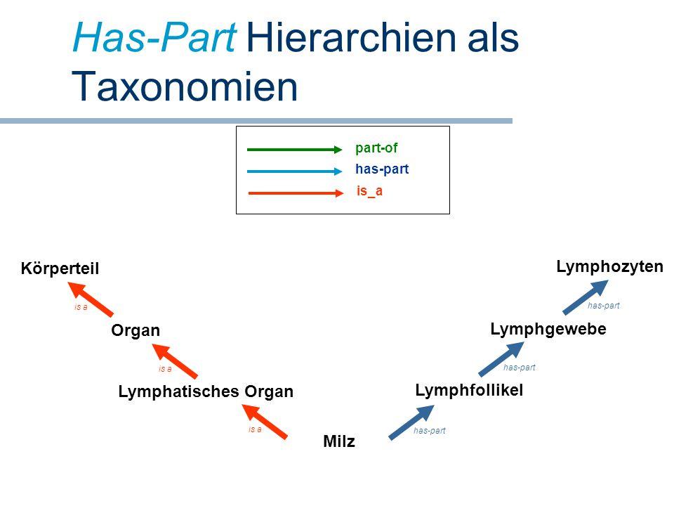 Has-Part Hierarchien als Taxonomien Milz Lymphatisches Organ Organ Lymphfollikel Lymphgewebe Lymphozyten Körperteil is a has-part part-of has-part is_