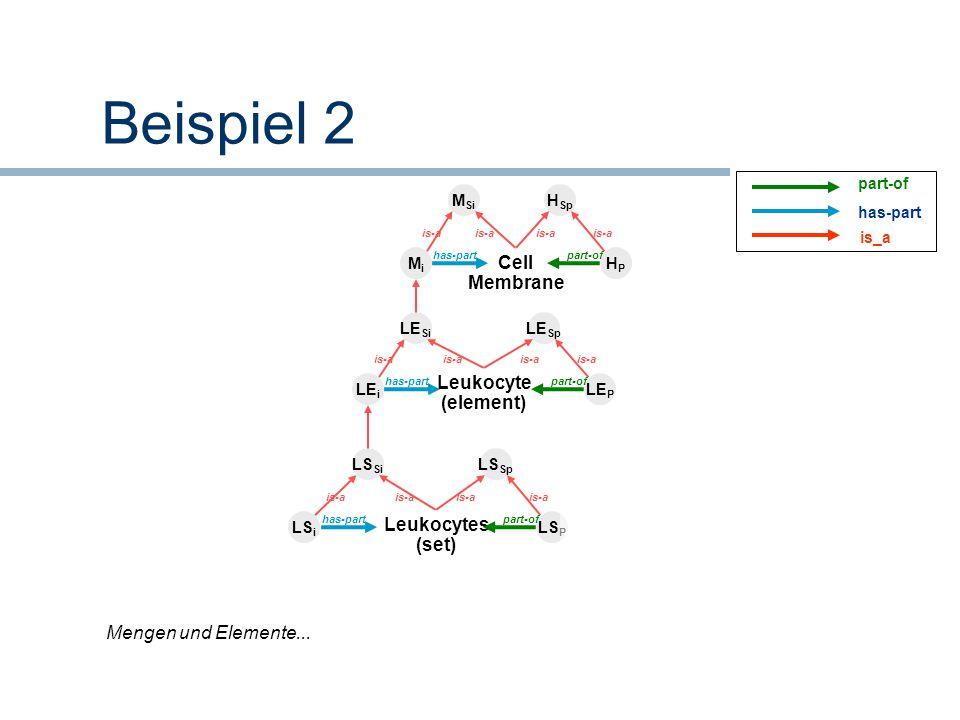 Beispiel 2 Cell Membrane MiMi HPHP M Si H Sp has-partpart-of is-a LE i LE P Leukocyte (element) LE Si LE Sp has-partpart-of is-a LS i LS P Leukocytes