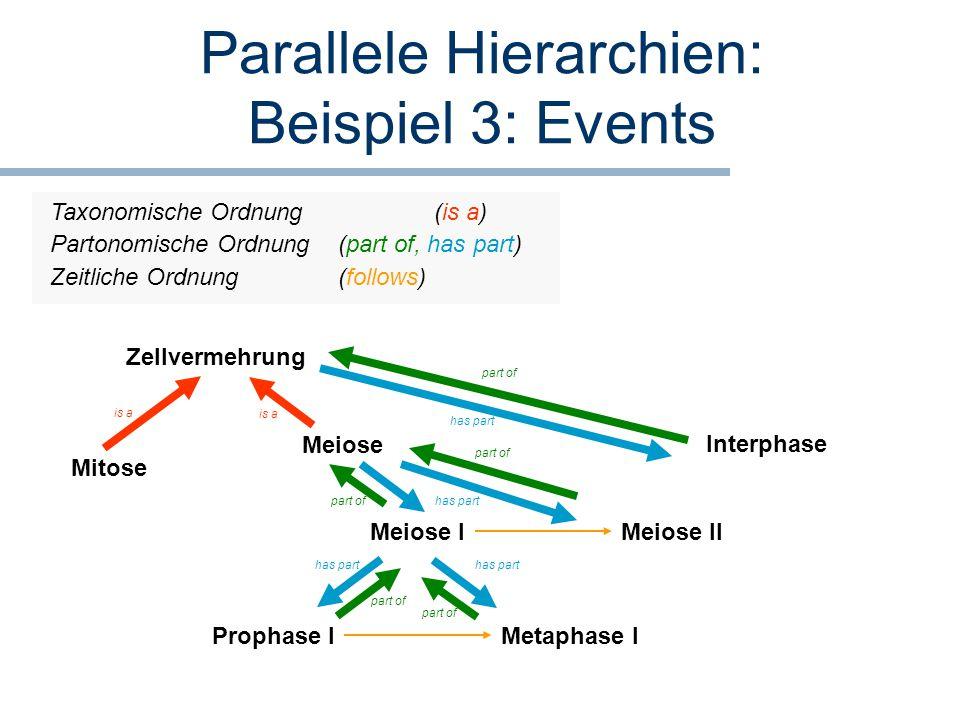 Parallele Hierarchien: Beispiel 3: Events Meiose Meiose I Prophase I Zellvermehrung is a Zeitliche Ordnung(follows) Mitose Meiose II Metaphase I has p