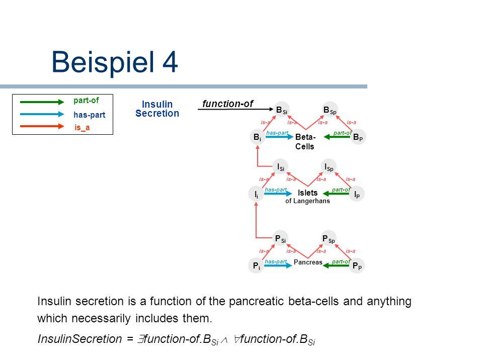 BiBi BPBP Beta- Cells B Si B Sp has-partpart-of is-a IiIi IPIP Islets of Langerhans I Si I Sp has-partpart-of is-a PiPiP Pancreas P Si P Sp has-partpa