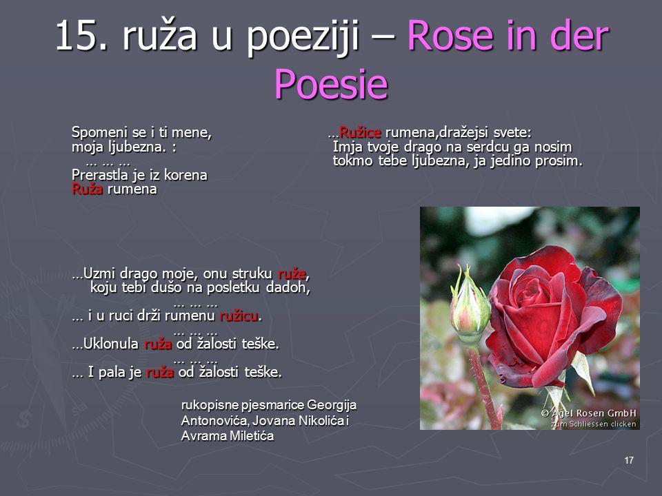 17 15. ruža u poeziji – Rose in der Poesie Spomeni se i ti mene, …Ružice rumena,dražejsi svete: moja ljubezna. : Imja tvoje drago na serdcu ga nosim …