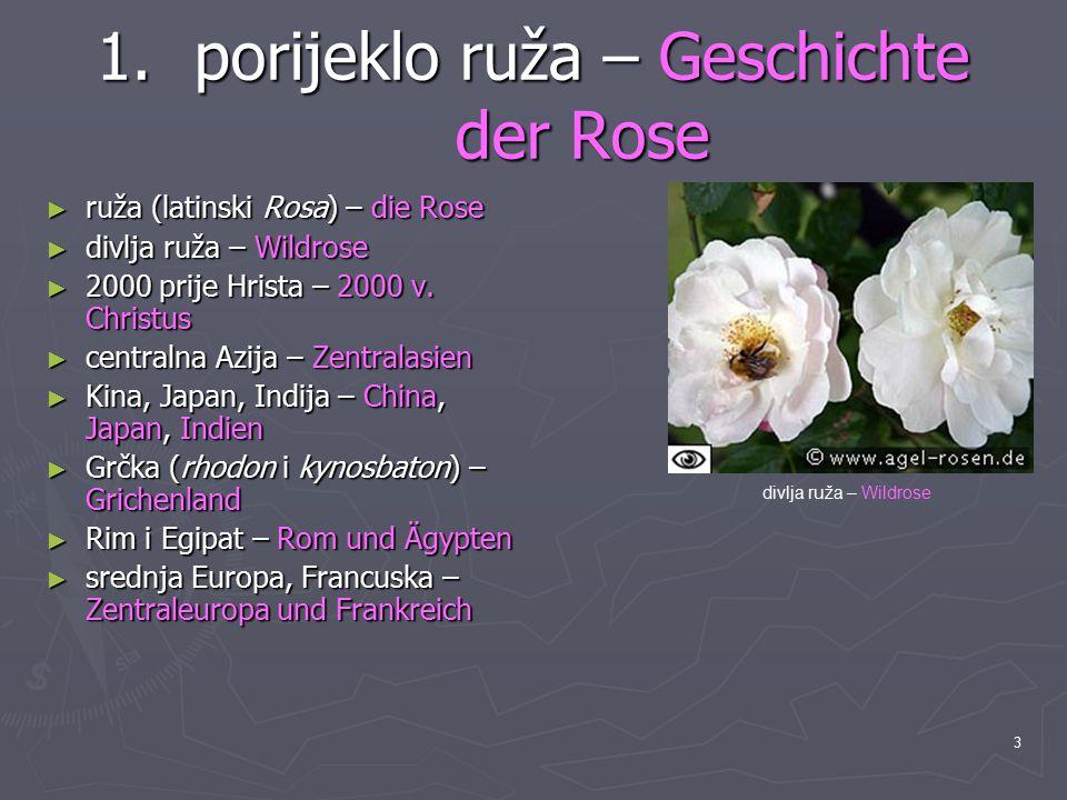 3 1.porijeklo ruža – Geschichte der Rose ► ruža (latinski Rosa) – die Rose ► divlja ruža – Wildrose ► 2000 prije Hrista – 2000 v. Christus ► centralna