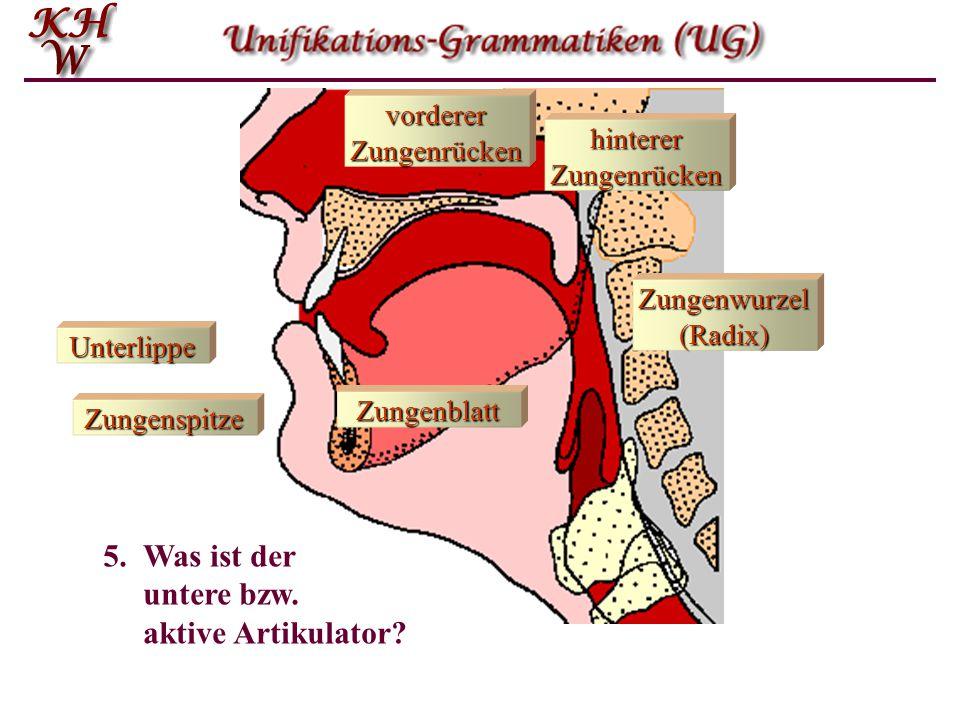 Unterlippe Zungenspitze Zungenblatt vorderer Zungenrücken Zungenwurzel (Radix) hinterer Zungenrücken 5.Was ist der untere bzw. aktive Artikulator?