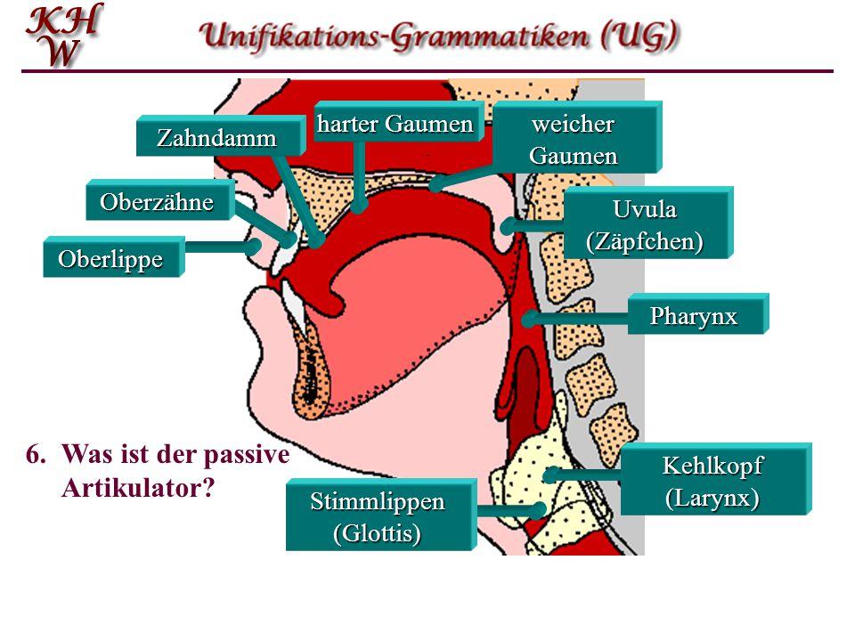 Oberlippe Oberzähne Zahndamm harter Gaumen weicher Gaumen Stimmlippen (Glottis) Pharynx Uvula (Zäpfchen) Kehlkopf (Larynx) 6.Was ist der passive Artik