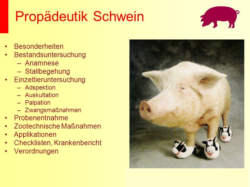 Propädeutik Schwein Besonderheiten Bestandsuntersuchung –Anamnese –Stallbegehung Einzeltieruntersuchung –Adspektion –Auskultation –Palpation –Zwangsma