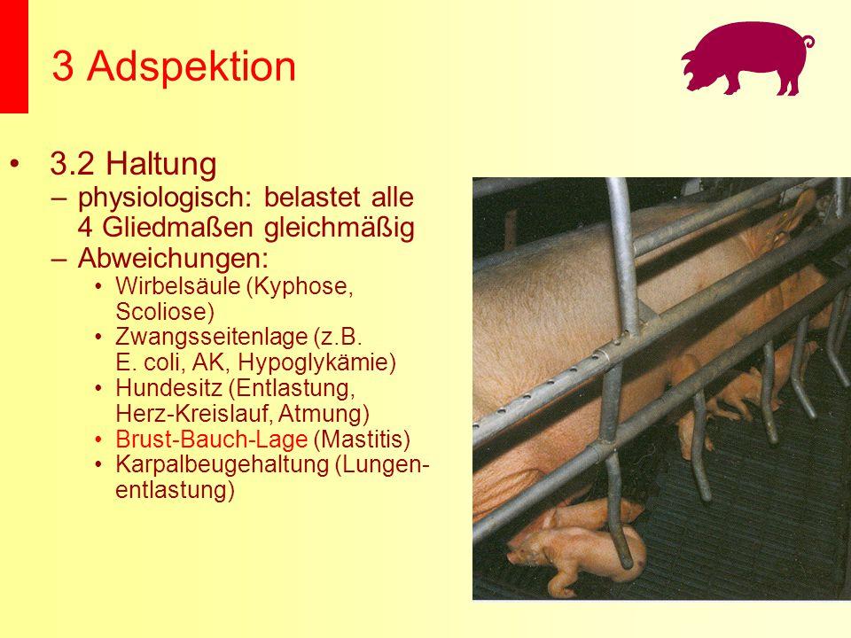 3 Adspektion 3.2 Haltung –physiologisch: belastet alle 4 Gliedmaßen gleichmäßig –Abweichungen: Wirbelsäule (Kyphose, Scoliose) Zwangsseitenlage (z.B.