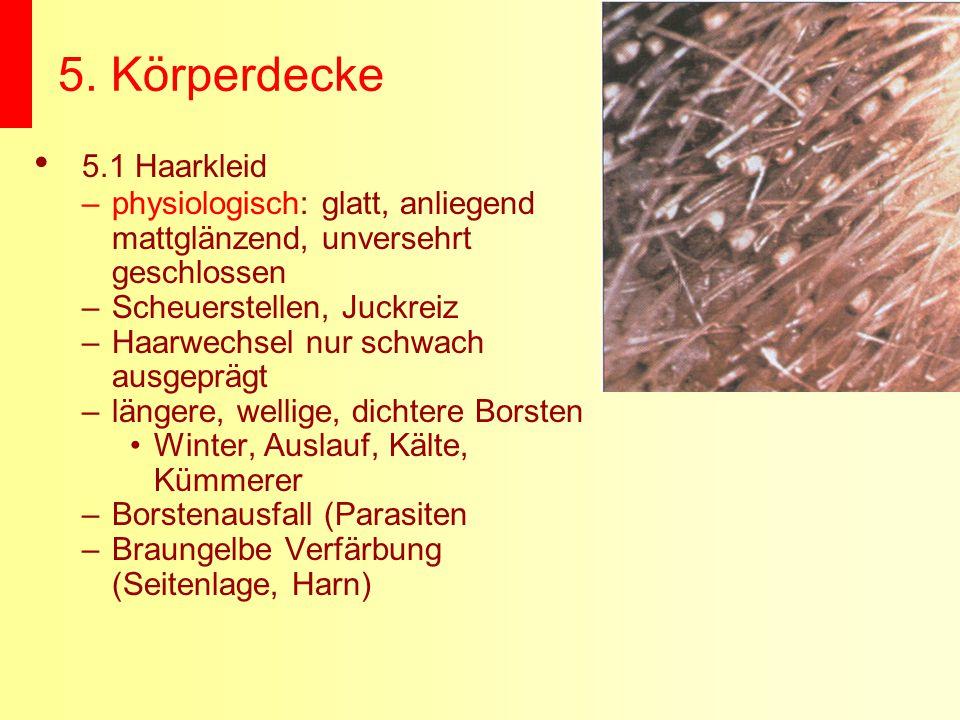 5. Körperdecke 5.1 Haarkleid –physiologisch: glatt, anliegend mattglänzend, unversehrt geschlossen –Scheuerstellen, Juckreiz –Haarwechsel nur schwach