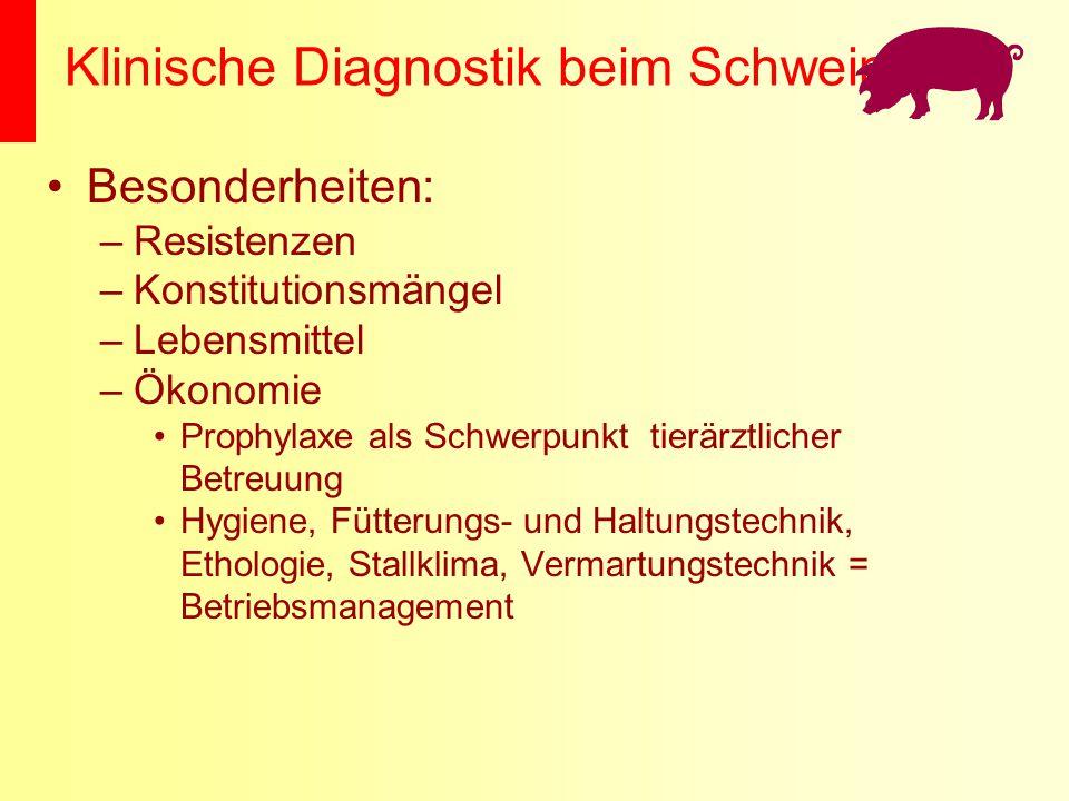 Klinische Diagnostik beim Schwein Besonderheiten: –Resistenzen –Konstitutionsmängel –Lebensmittel –Ökonomie Prophylaxe als Schwerpunkt tierärztlicher