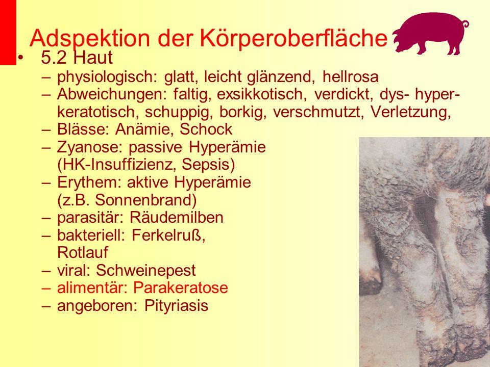 Adspektion der Körperoberfläche 5.2 Haut –physiologisch: glatt, leicht glänzend, hellrosa –Abweichungen: faltig, exsikkotisch, verdickt, dys- hyper- k