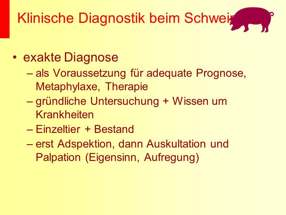 Klinische Diagnostik beim Schwein exakte Diagnose –als Voraussetzung für adequate Prognose, Metaphylaxe, Therapie –gründliche Untersuchung + Wissen um