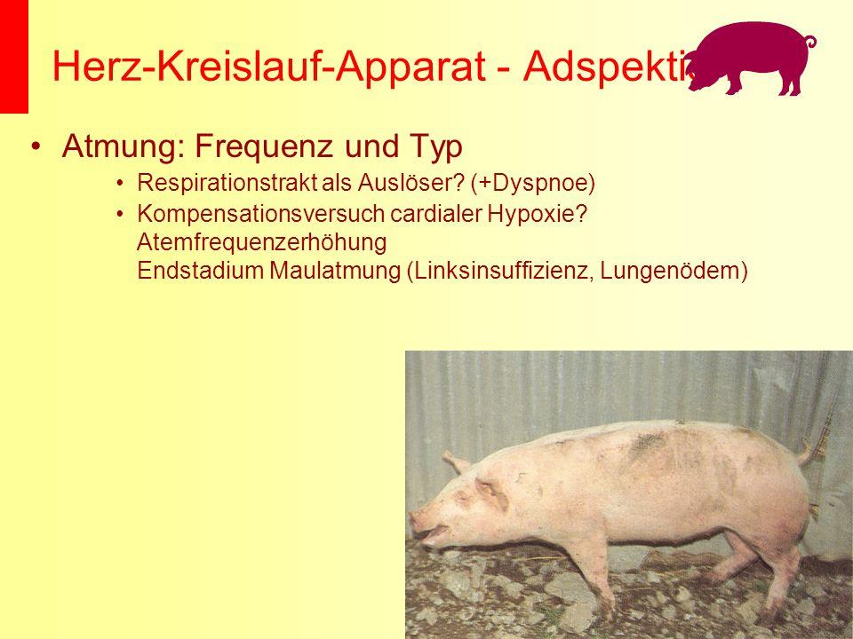 Herz-Kreislauf-Apparat - Adspektion Atmung: Frequenz und Typ Respirationstrakt als Auslöser? (+Dyspnoe) Kompensationsversuch cardialer Hypoxie? Atemfr