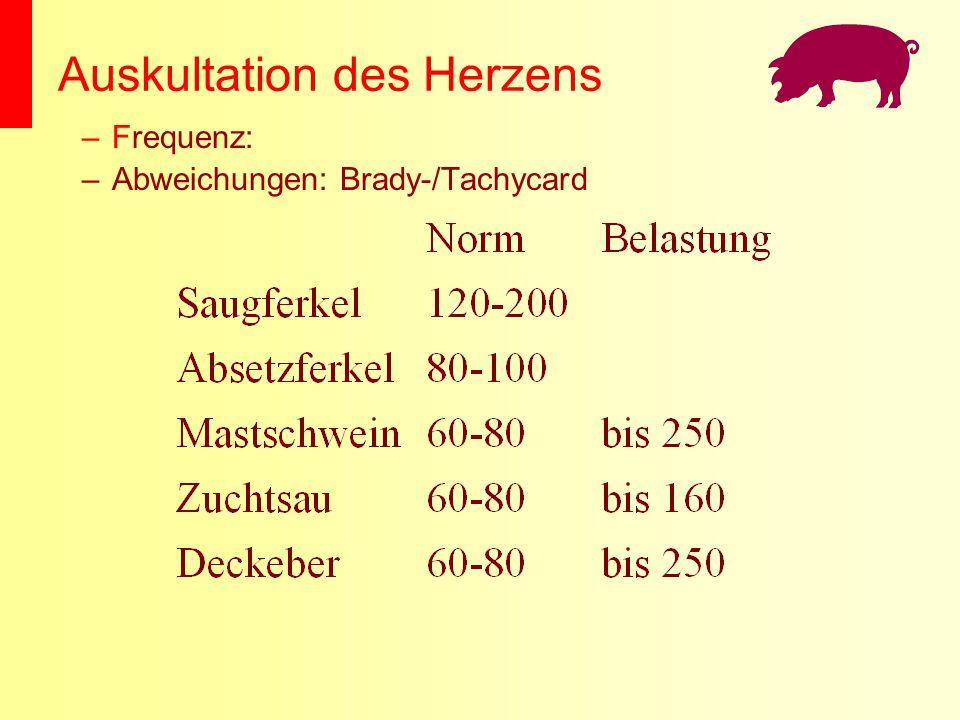 Auskultation des Herzens –Frequenz: –Abweichungen: Brady-/Tachycard