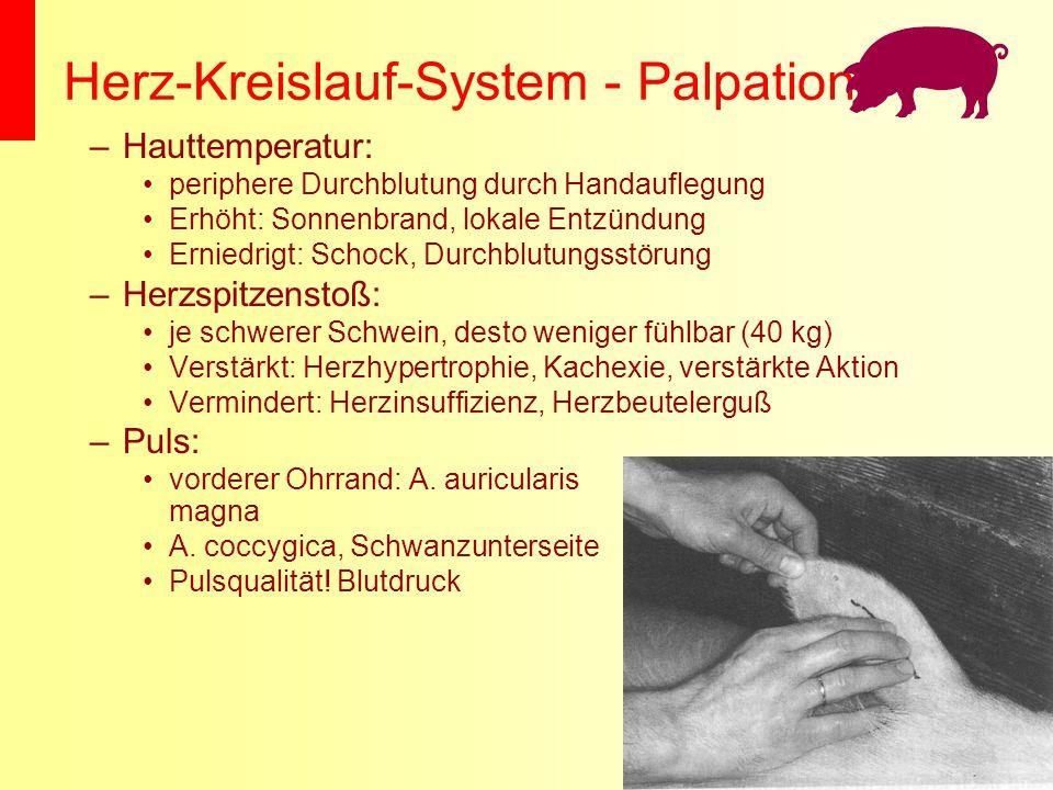 Herz-Kreislauf-System - Palpation –Hauttemperatur: periphere Durchblutung durch Handauflegung Erhöht: Sonnenbrand, lokale Entzündung Erniedrigt: Schoc