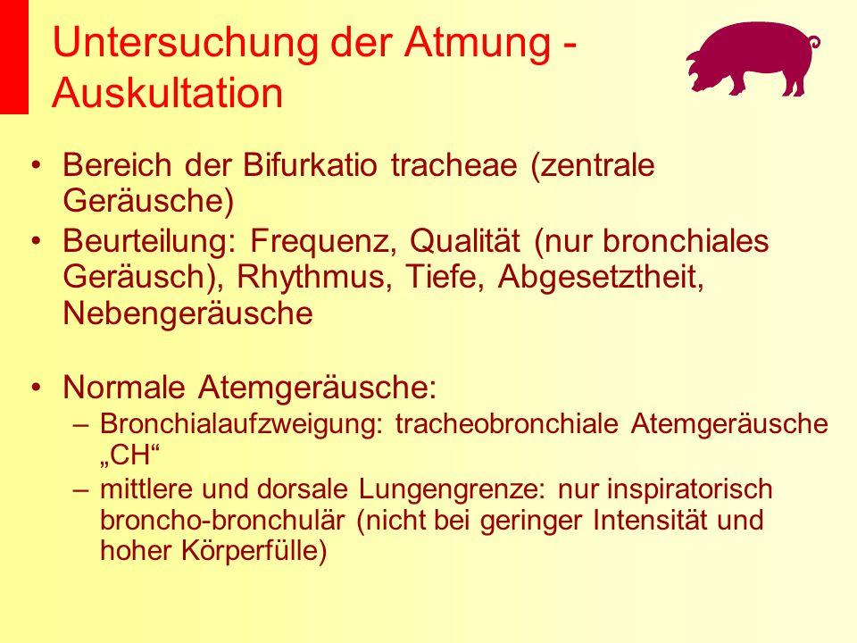 Untersuchung der Atmung - Auskultation Bereich der Bifurkatio tracheae (zentrale Geräusche) Beurteilung: Frequenz, Qualität (nur bronchiales Geräusch)