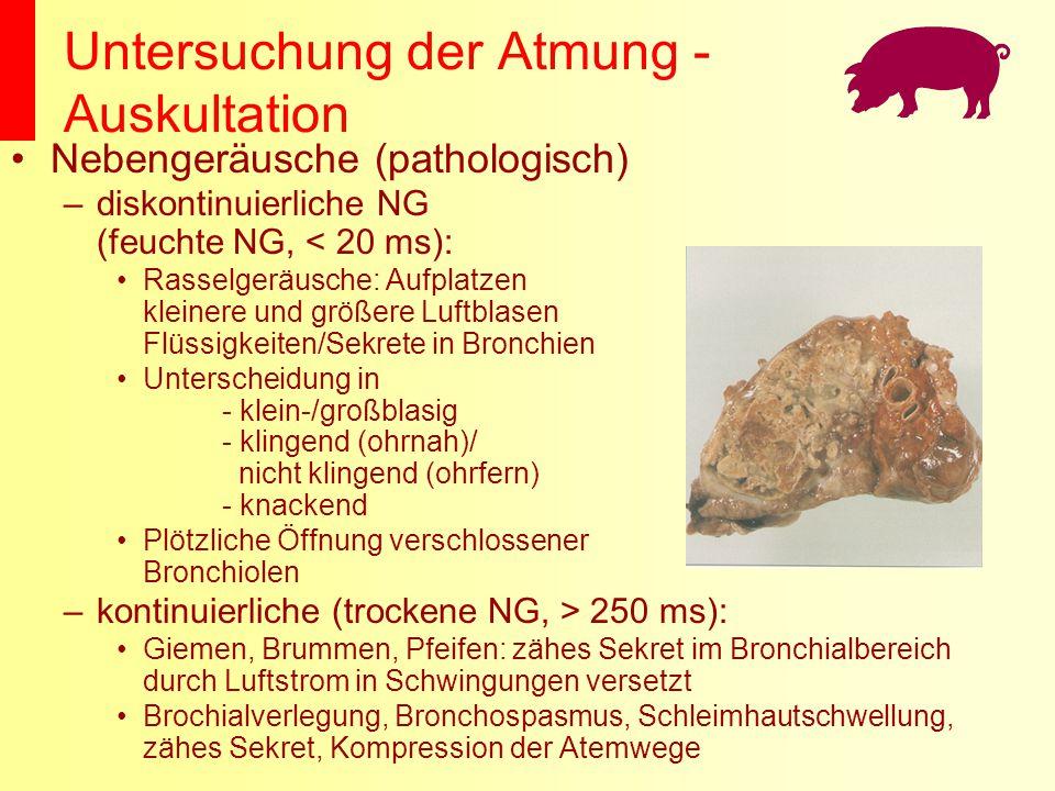 Untersuchung der Atmung - Auskultation Nebengeräusche (pathologisch) –diskontinuierliche NG (feuchte NG, < 20 ms): Rasselgeräusche: Aufplatzen kleiner