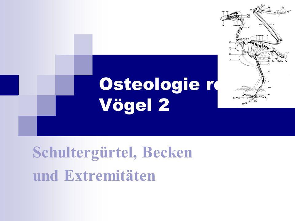 Osteologie rezenter Vögel 2 Schultergürtel, Becken und Extremitäten