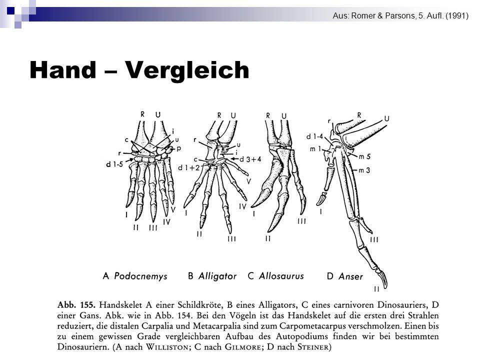 Hand – Vergleich Aus: Romer & Parsons, 5. Aufl. (1991)