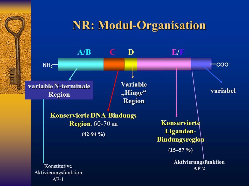 NR: Modul-Organisation NH 2 COO - variable N-terminale Region Konservierte DNA-Bindungs Region: 60-70 aa (42-94 %) Konservierte Liganden- Bindungsregi