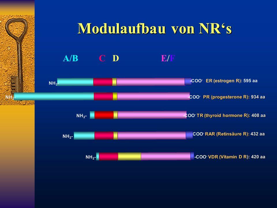 Modulaufbau von NR's NH 2 - -COO - ER (estrogen R): 595 aa RAR (Retinsäure R): 432 aa -COO - RAR (Retinsäure R): 432 aa NH 2 - TR (thyroid hormone R):