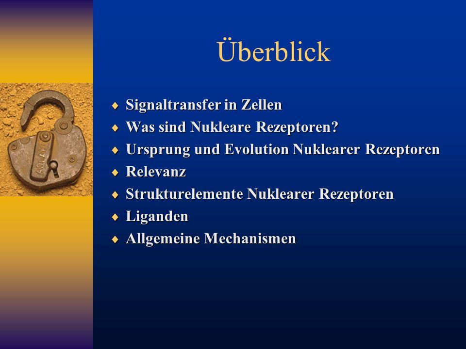 Überblick  Signaltransfer in Zellen  Was sind Nukleare Rezeptoren?  Ursprung und Evolution Nuklearer Rezeptoren  Relevanz  Strukturelemente Nukle