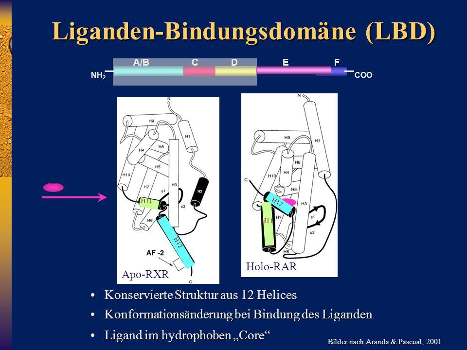 A/B C D E F NH 2 COO - Liganden-Bindungsdomäne (LBD) Konservierte Struktur aus 12 Helices Konformationsänderung bei Bindung des Liganden Konformations