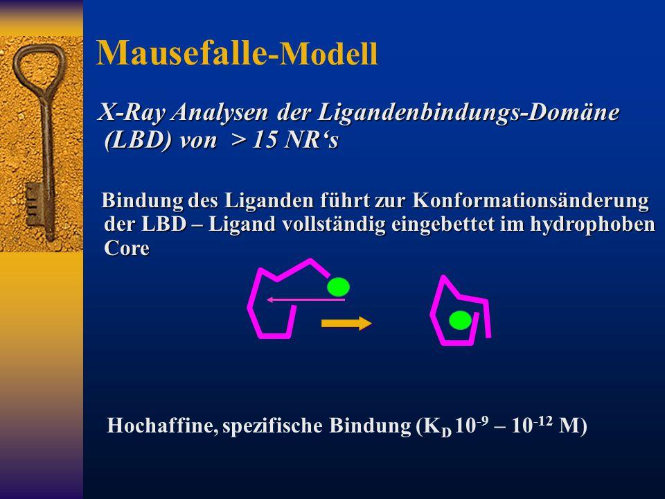 X-Ray Analysen der Ligandenbindungs-Domäne (LBD) von > 15 NR's X-Ray Analysen der Ligandenbindungs-Domäne (LBD) von > 15 NR's Bindung des Liganden füh