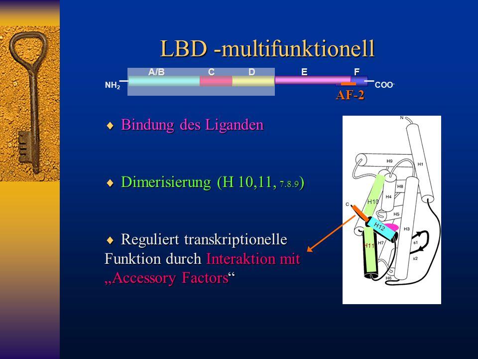 LBD -multifunktionell A/B C D E F NH 2 COO -  Bindung des Liganden  Dimerisierung (H 10,11, 7.8.9 )  Reguliert transkriptionelle Funktion durch Int