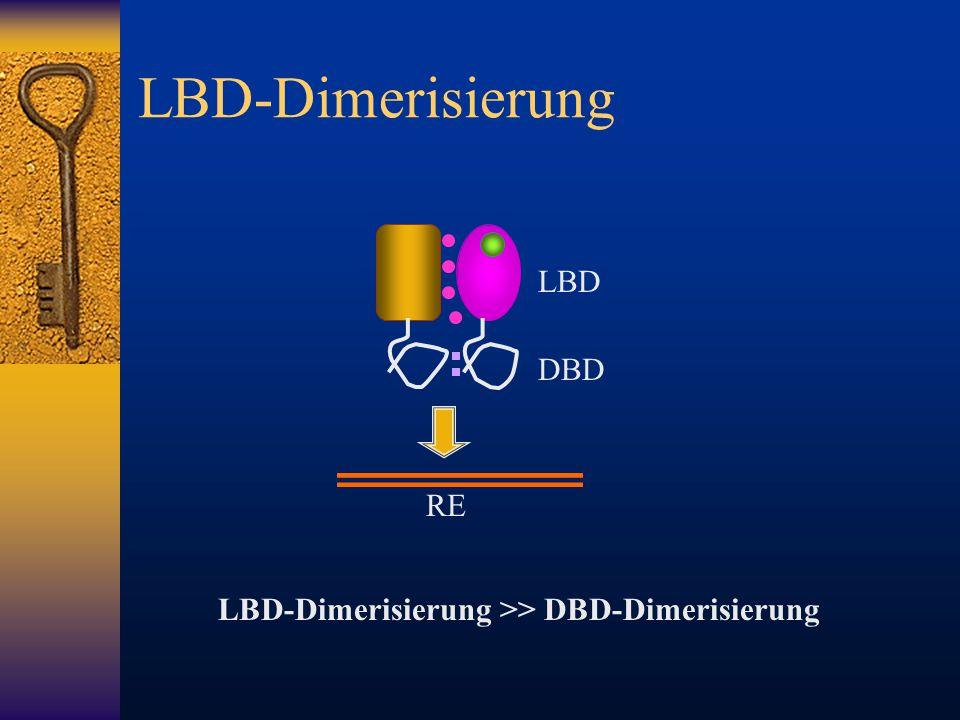 LBD-Dimerisierung LBD DBD LBD-Dimerisierung >> DBD-Dimerisierung RE