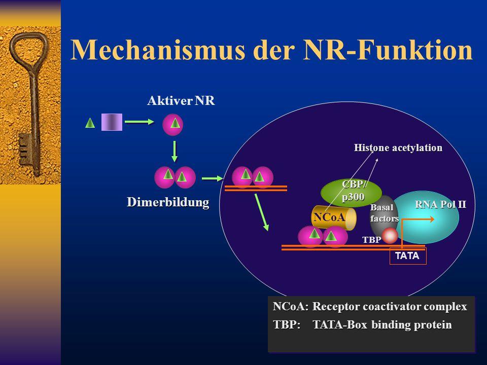 Mechanismus der NR-Funktion TATA NCoA: Receptor coactivator complex TBP: TATA-Box binding protein NCoA: Receptor coactivator complex TBP: TATA-Box bin