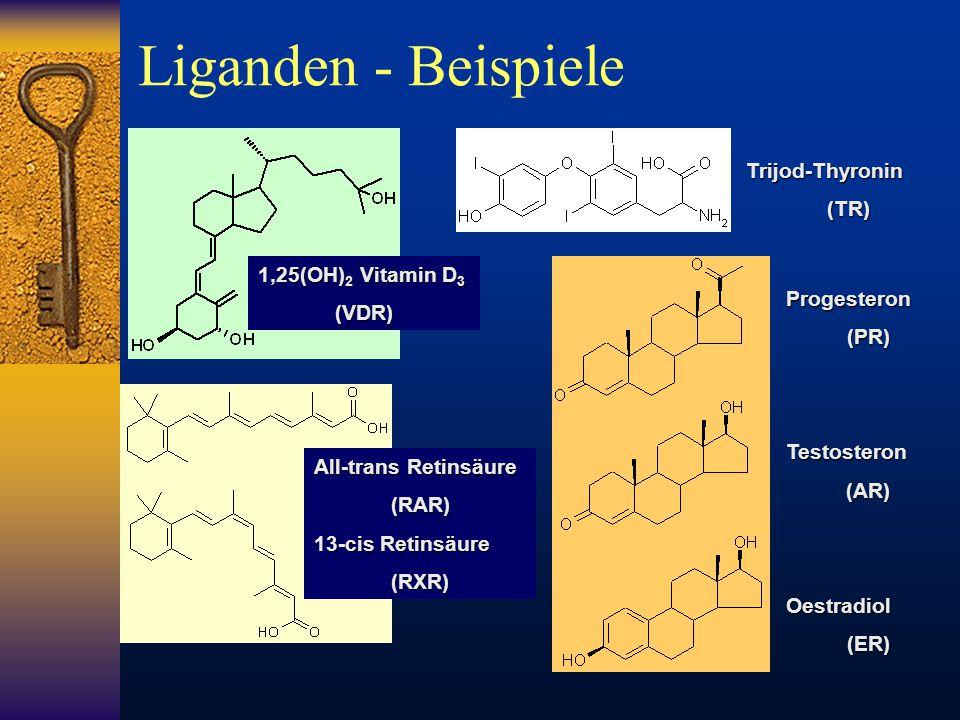 1,25(OH) 2 Vitamin D 3 (VDR) All-trans Retinsäure (RAR) 13-cis Retinsäure (RXR) Progesteron(PR)Testosteron(AR)Oestradiol(ER) Trijod-Thyronin(TR) Ligan