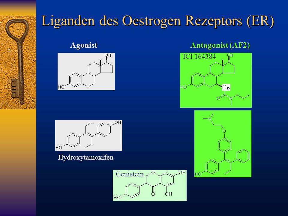 Liganden des Oestrogen Rezeptors (ER) Hydroxytamoxifen ICI 164384 GenisteinAgonist Antagonist (AF2)