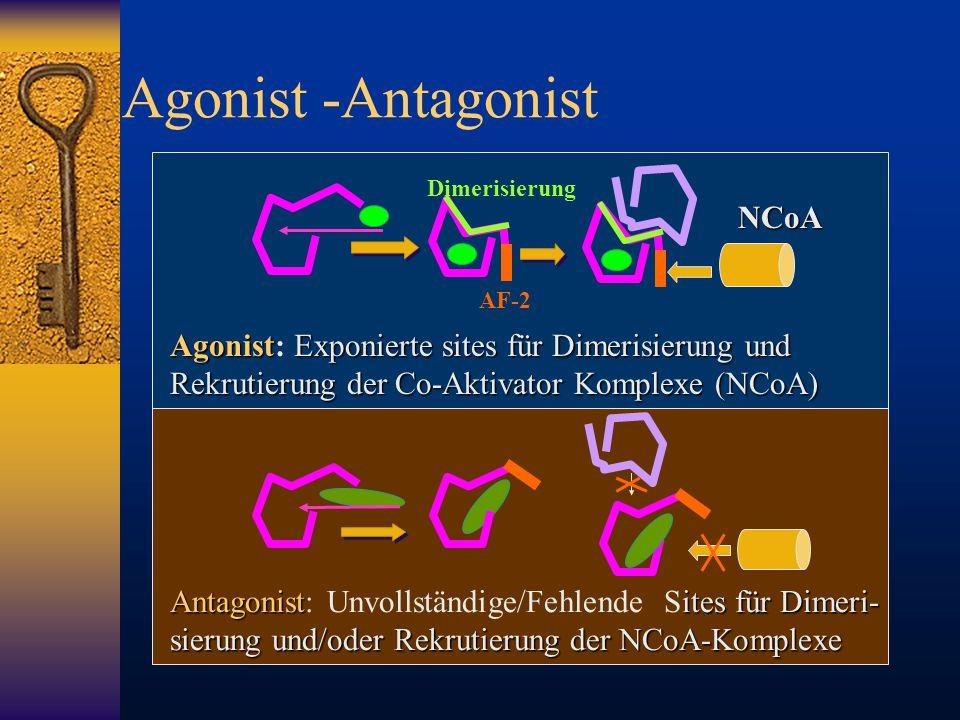 Agonist -Antagonist NCoA AF-2 Dimerisierung AgonistExponierte sites für Dimerisierung und Rekrutierung der Co-Aktivator Komplexe (NCoA) Agonist: Expon