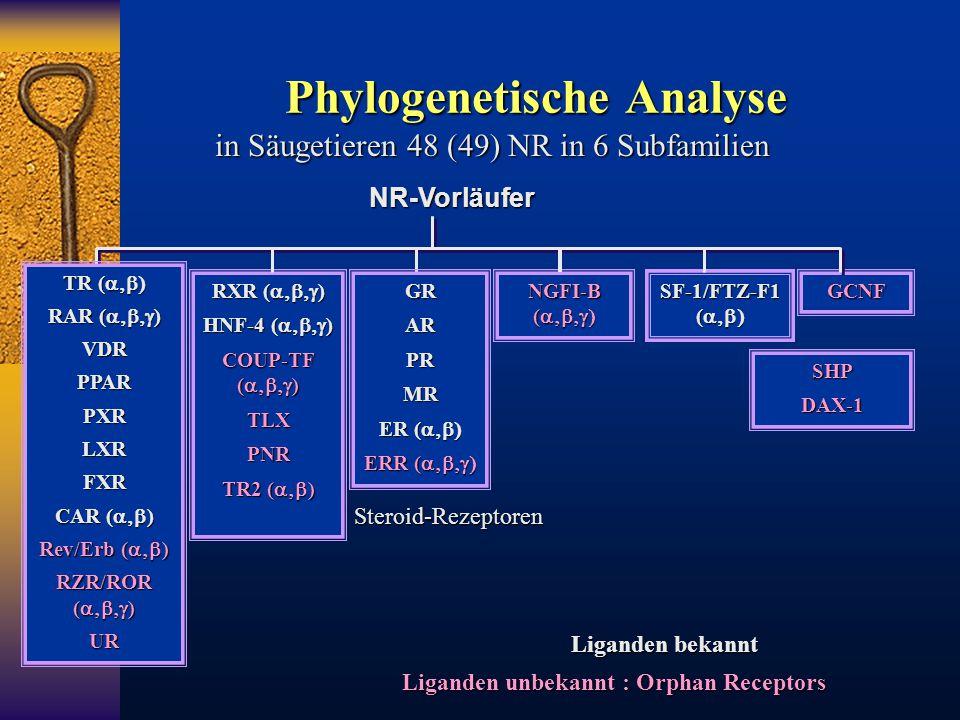 Phylogenetische Analyse in Säugetieren 48 (49) NR in 6 Subfamilien NR-Vorläufer RXR (  ) HNF-4 (  ) COUP-TF (  ) TLXPNR TR2 (  ) NGF