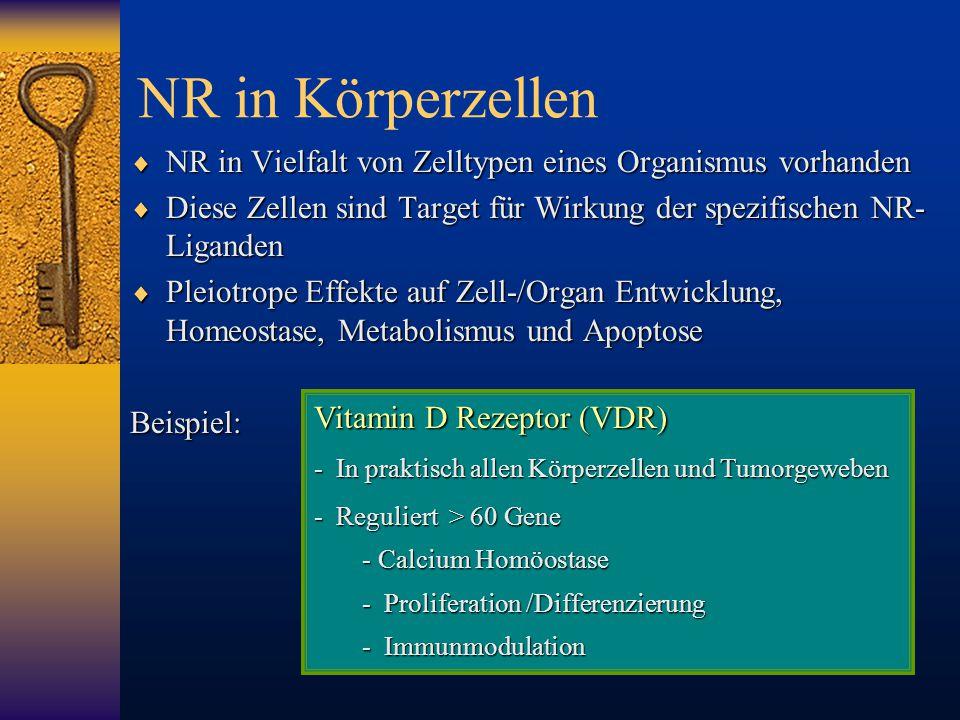 NR in Körperzellen  NR in Vielfalt von Zelltypen eines Organismus vorhanden  Diese Zellen sind Target für Wirkung der spezifischen NR- Liganden  Pl