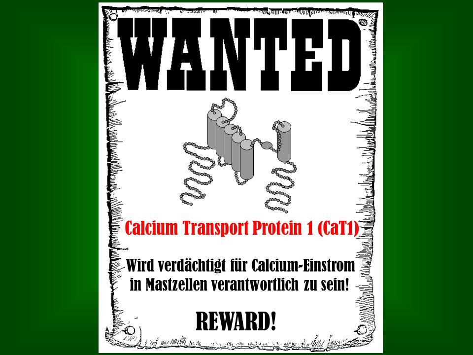 Calcium Transport Protein 1 (CaT1) Wird verdächtigt für Calcium-Einstrom in Mastzellen verantwortlich zu sein! REWARD!
