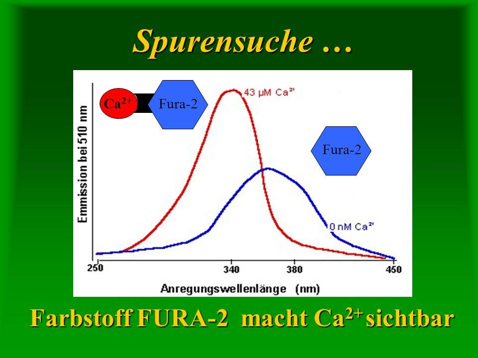 Spurensuche … Farbstoff FURA-2 macht Ca 2+ sichtbar Fura-2 Ca 2+ Fura-2