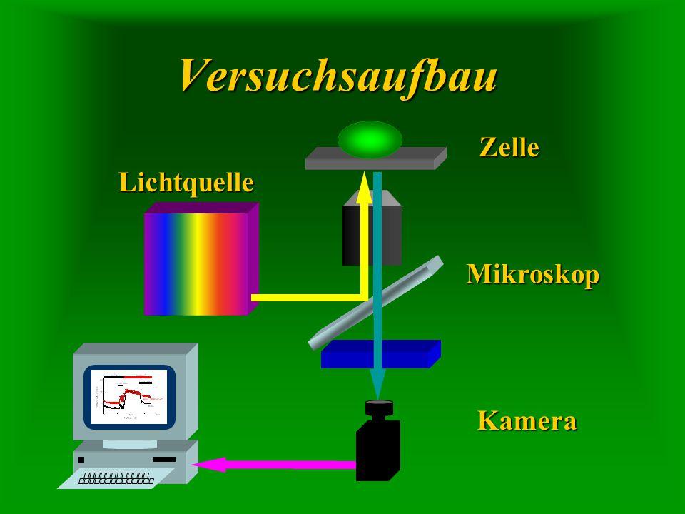 Zelle Kamera Lichtquelle Mikroskop Versuchsaufbau