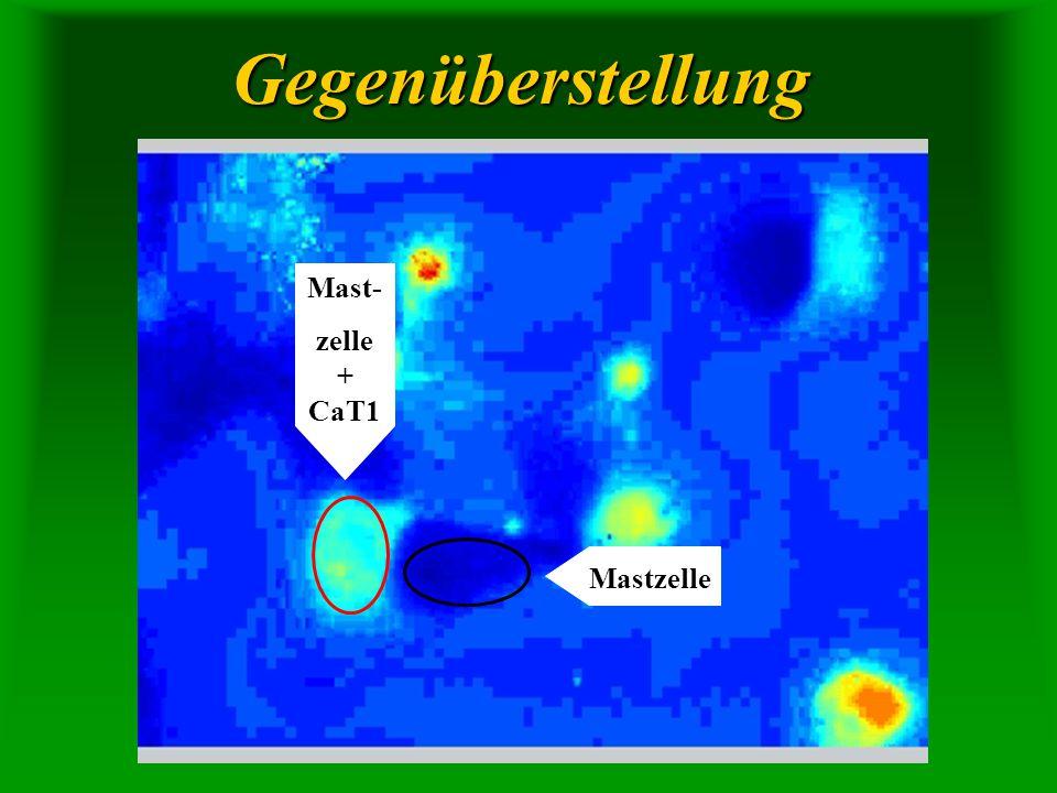 Gegenüberstellung Mastzelle Mast- zelle + CaT1
