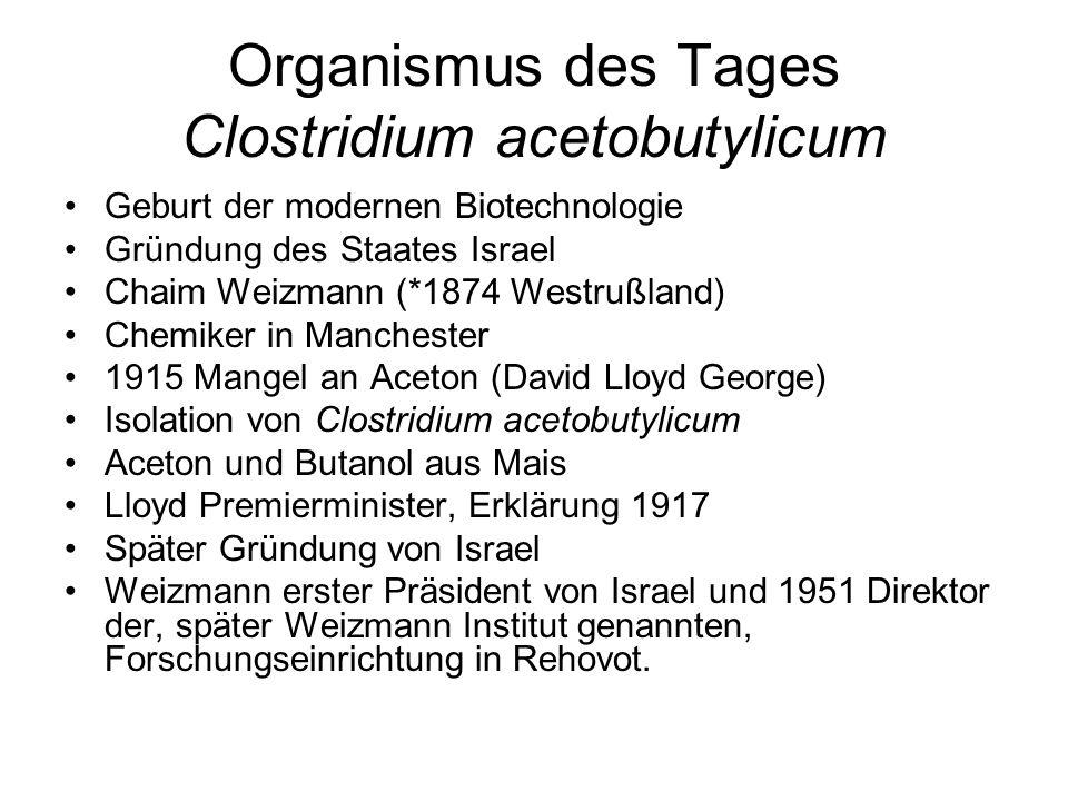 Organismus des Tages Clostridium acetobutylicum Geburt der modernen Biotechnologie Gründung des Staates Israel Chaim Weizmann (*1874 Westrußland) Chem