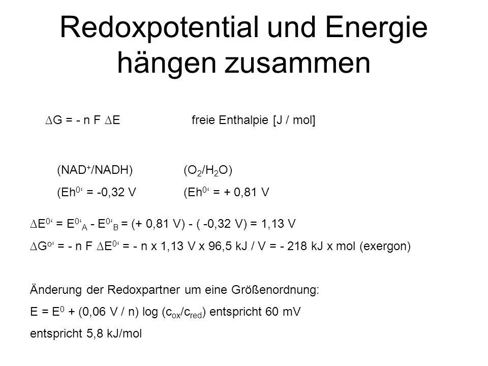 Redoxpotential und Energie hängen zusammen (NAD + /NADH) (Eh 0 ' = -0,32 V (O 2 /H 2 O) (Eh 0 ' = + 0,81 V ∆E 0 ' = E 0 ' A - E 0 ' B = (+ 0,81 V) - (