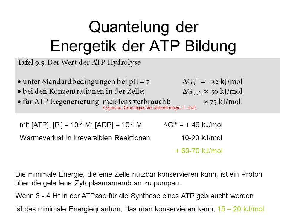 Quantelung der Energetik der ATP Bildung Die minimale Energie, die eine Zelle nutzbar konservieren kann, ist ein Proton über die geladene Zytoplasmame
