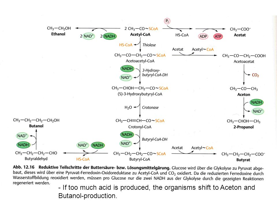- If too much acid is produced, the organisms shift to Aceton and Butanol-production.