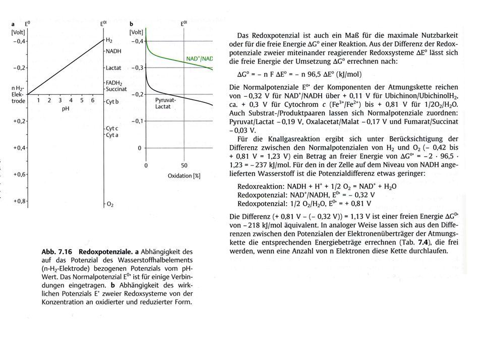 Redoxpotential Nernstgleichung: E = E 0 + (RT/n F) x ln(ox/red) (30°C) RT/F = 8,31 x 30/96500 [J K mol/K mol C] = 0,0261 [V] E = E 0 + 0,0261 V / n x 2,3 log(ox/red) = E 0 + 0,06 V / n x log(ox/red) Wasserstoffnormalelektrode H 2 ↔ 2H + + 2e - Bei Standardbedingungen (alle Reaktanden = 1, H 2 = 1 Bar, pH = 0) E = E 0 – definitionsgemäß gleich Null gesetzt E 0 ' von Wasserstoff für pH = 7,0 (30°C): E 0 ' = E 0 + (0,06 V / n) log (c ox (ox) /c red (red) ) E 0 = 0 E 0 ' = (0,06 V / n) log ((10 -7 ) 2 /1)H 2 ↔ 2H + + 2e - = (0,06 V / 2) log 10 -14 = 0,03 V x (-14) = - 0,42 V
