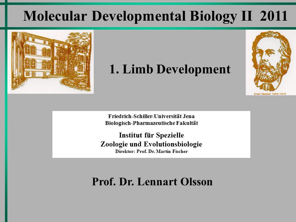 Molecular Developmental Biology II 2011 Friedrich-Schiller-Universität Jena Biologisch-Pharmazeutische Fakultät Institut für Spezielle Zoologie und Evolutionsbiologie Direktor: Prof.