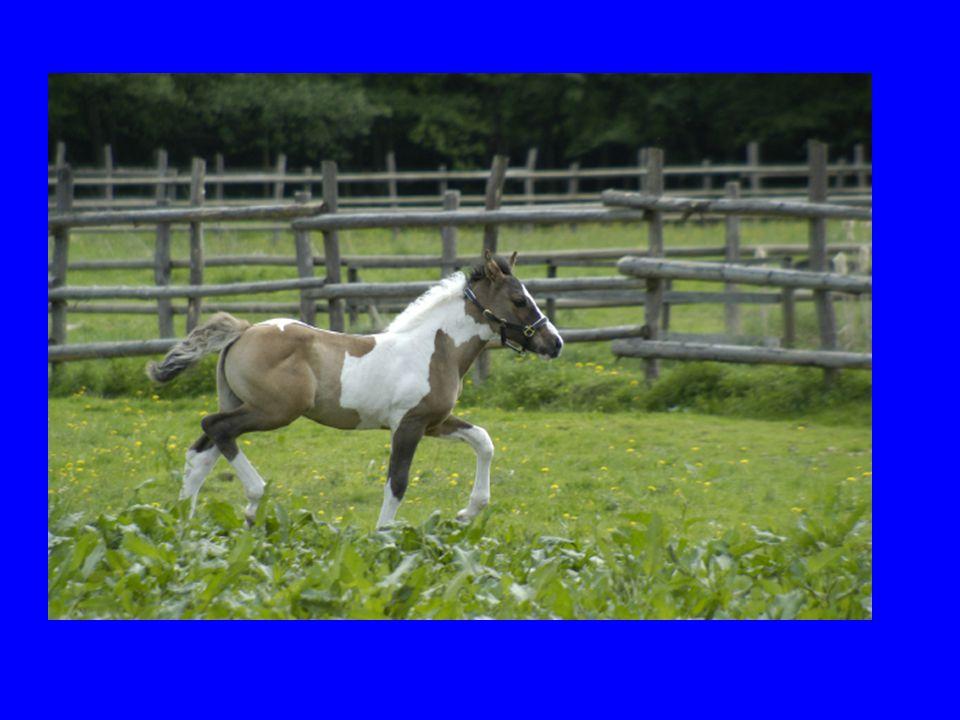 Was hat das alles noch für das Pferd gebracht? HufeisenHufeisen LahmheitLahmheit RückenschmerzenRückenschmerzen KolikKolik LungenerkrankungenLungenerk
